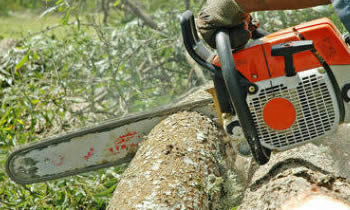 Tree Removal in Troy MI Tree Removal Quotes in Troy MI Tree Removal Estimates in Troy MI Tree Removal Services in Troy MI Tree Removal Professionals in Troy MI Tree Services in Troy MI