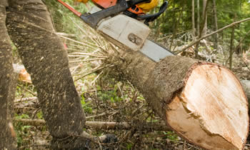 Tree Service in Troy MI Tree Service Estimates in Troy MI Tree Service Quotes in Troy MI Tree Service Professionals in Troy MI