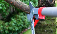 Tree Pruning Services in Troy MI