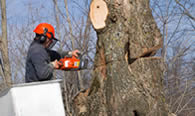 Tree Removal in Troy MI